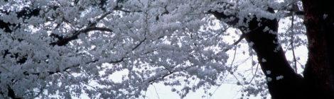 Rassegna settimanale 22-28 marzo: Giappone