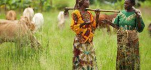 Rassegna settimanale 26 - 31 maggio: Africa Subsahariana