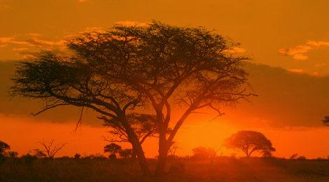 Rassegna settimanale 11-18 aprile: Africa Subsahariana