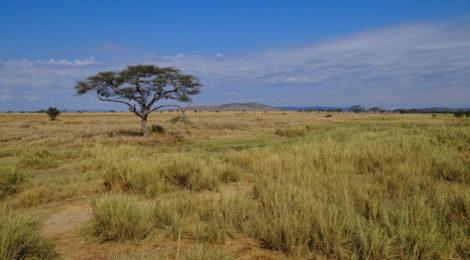 Rassegna settimanale 25 aprile-1 maggio: Africa Subsahariana