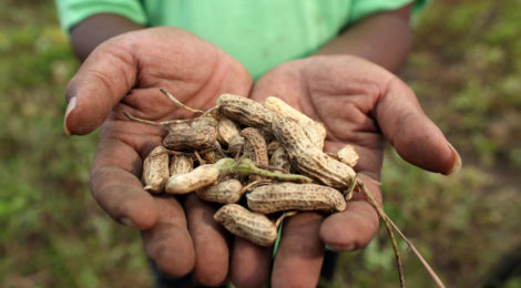 Food security nella regione Asia-Pacifico: una sfida alla stabilità della zona