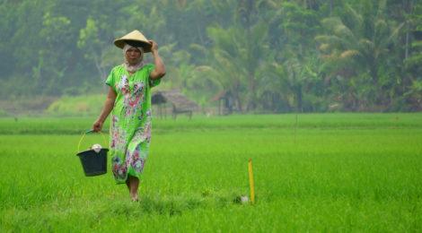 Rassegna settimanale 15 – 21 gennaio: Sud est asiatico