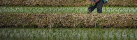 farmer-japan